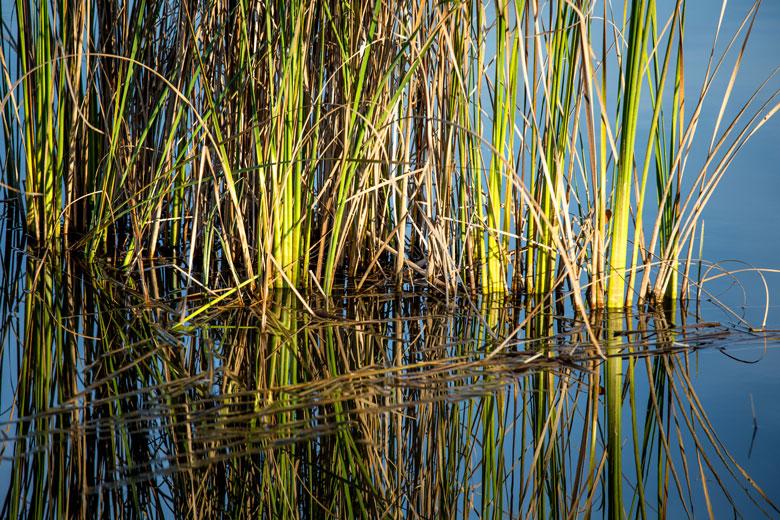 Foto-Wasser-Gras