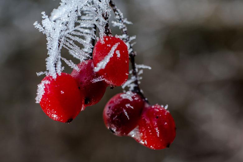 Foto-Winterfrüchte